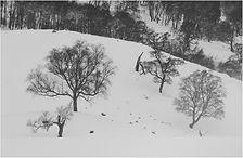 Winter in the highlands.JPG