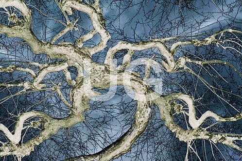 Bäume-Artefakte VIII
