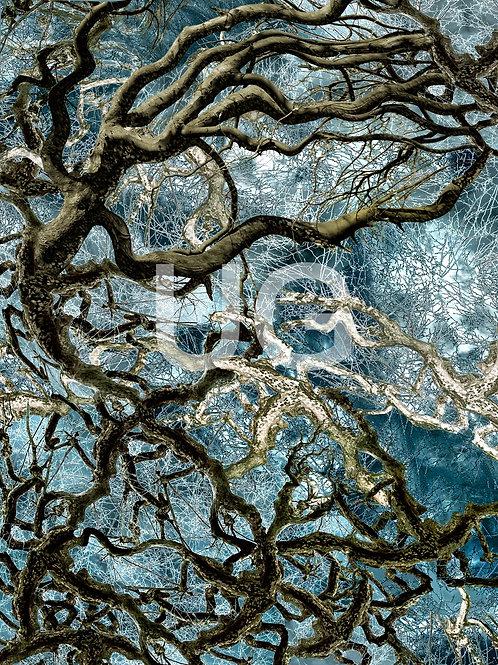 Bäume-ZNS IV