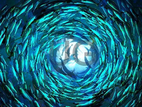 Shoal of fish II