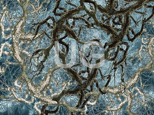 Bäume ZNS II
