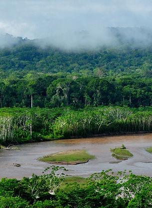 Madidi_Nationalpark_Amazonas_Bolivien_ed