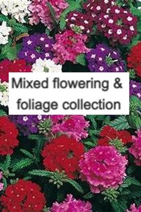 10 mixed flowering & foliage plants