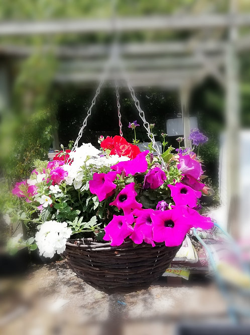 """Pretty Polly NEW 14"""" hanging basket bright pink/purple/white"""