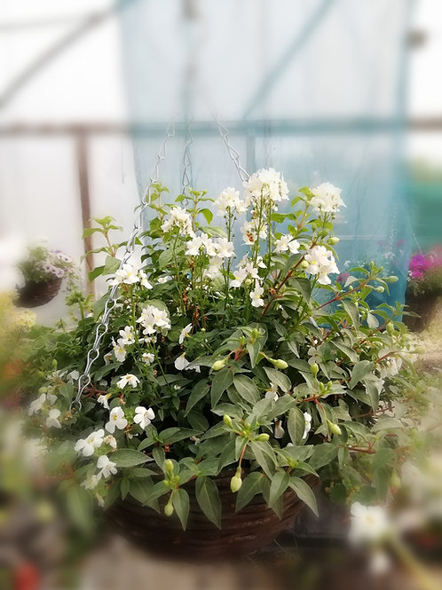 "Refill 'Winnie' White 14"" hanging basket white colours"