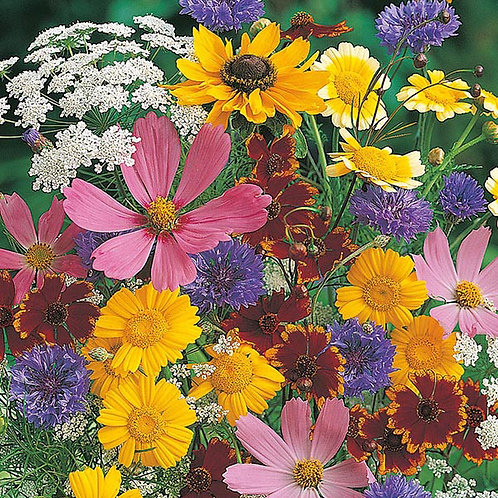 Butterfly attracting mixed flowers
