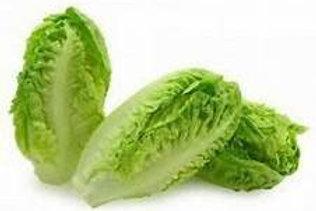 Little gem lettuce 6 pack