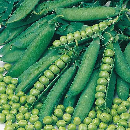 Pea seeds Onward