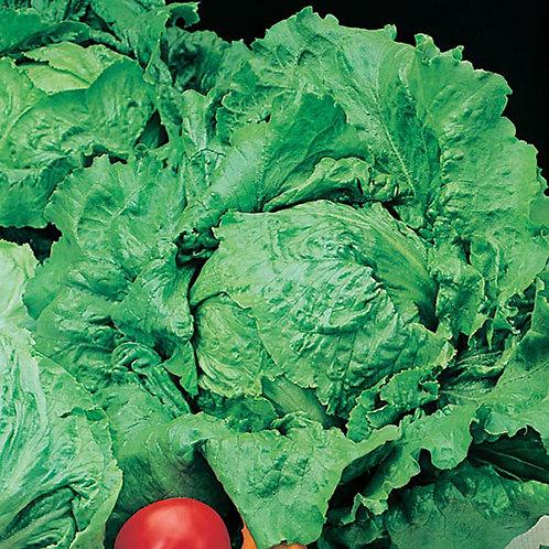 Lettuce Webbs Wonderful Seeds