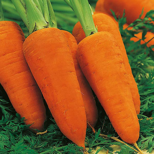 Carrot Chantennay Red core