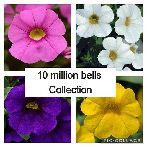 10 mixed million bells  (Calibrachoa) colours may vary