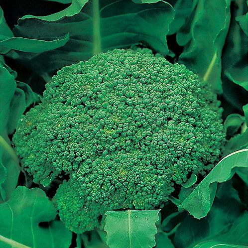 Broccoli Autumn green Calabrese