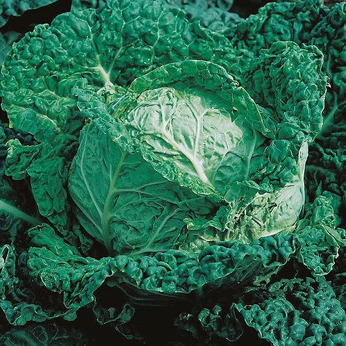 Cabbage savoy F1