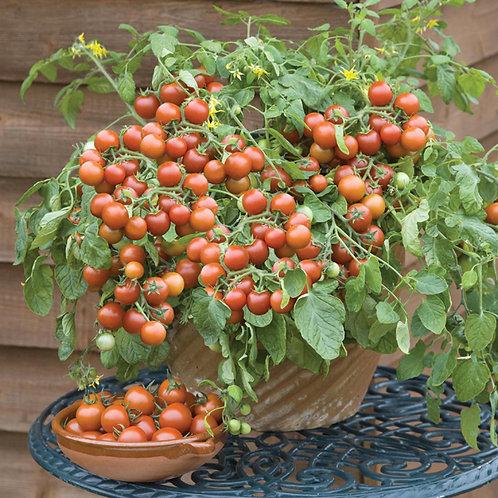 Cherry falls tomato seeds