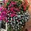 "Thumbnail: Pretty pastel NEW 16"" hanging basket mauve/pink/white"