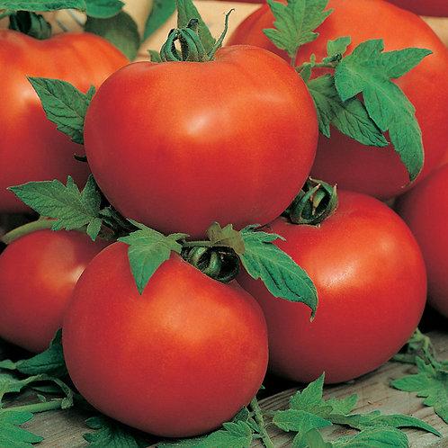 Tomato Alisa Craig seeds