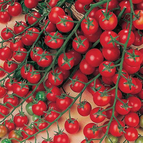 Sweet million tomatoes