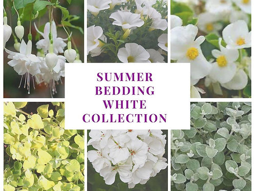 Bedding collection-simply white