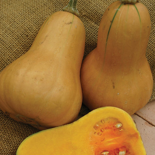 Butternut squash hawk