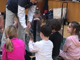 Winter 2018: Drumlin Farms visits SSS Kindergarten!