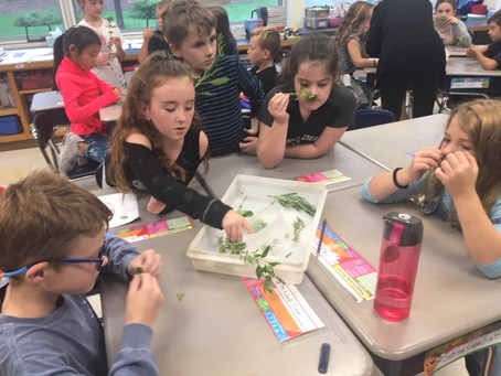 Fall 2018 Enrichment: Green City Growers visits 3rd Grade