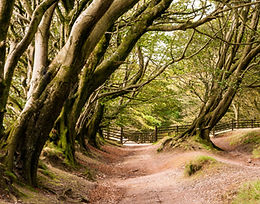 Tree Development Surveys & Consultancy