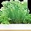 Thumbnail: Urban Greens Windowsill Grow Kit - micro herbs