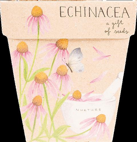 Sow n' Sow Gift of Seeds - Echinacea