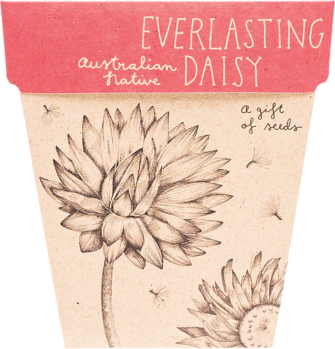 Sow n' Sow Gift of Seeds - Everlasting Daisy