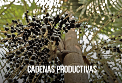 CADENAS-PRODUCTIVAS.jpg