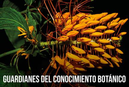 MONITOREO3-01-01.jpg