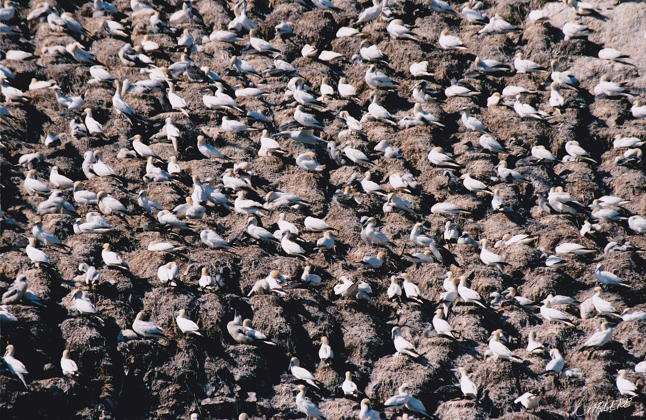 multitude d'oiseaux