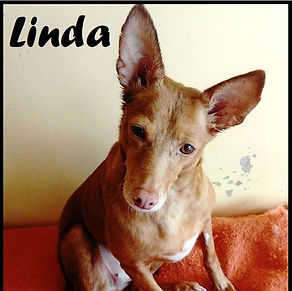 Linda_edited_edited.jpg