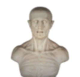 MARBLE BUST OF HUMAN ANATOMY_edited.jpg