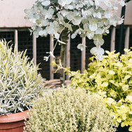 Mix aus Kräutern, Lavendel und Eucalyptus