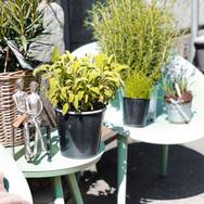 Kräuter arrangiert auf Outdoor-Möbel