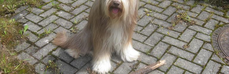 Herzenshund