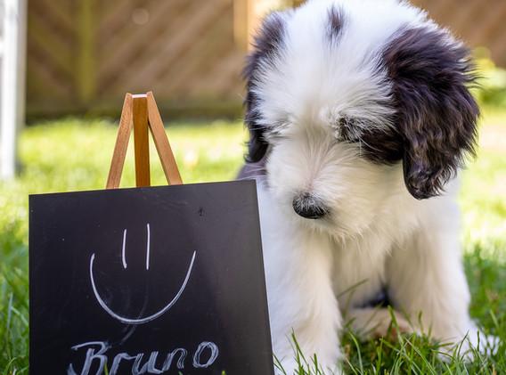 Be My Life Baxter (Bruno)