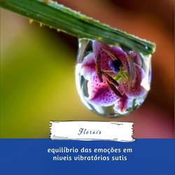 Florais