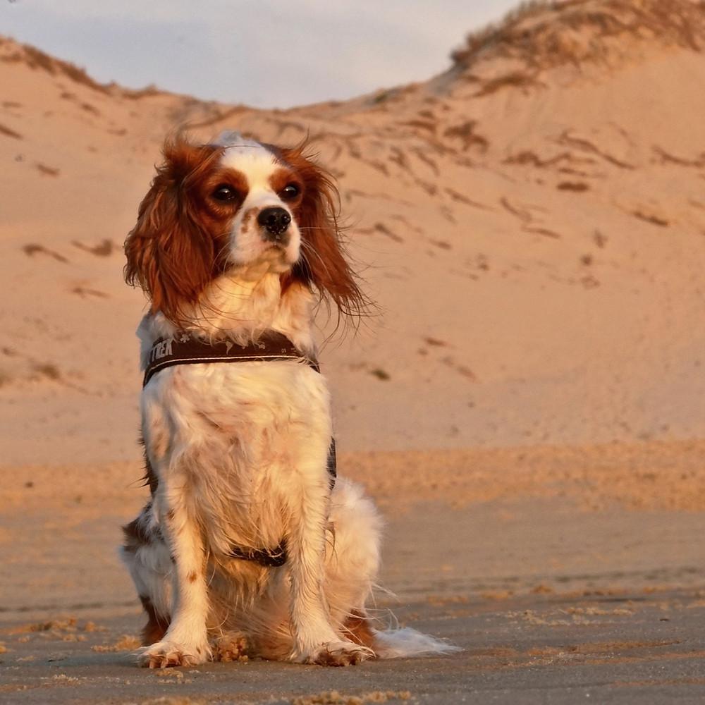 cachorro pet cães ar seco baixa umidade ar