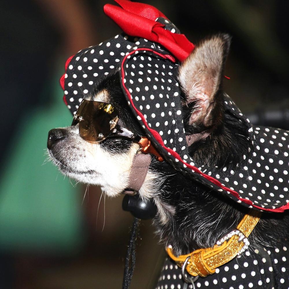 cachorro humanizado humanização roupa pet