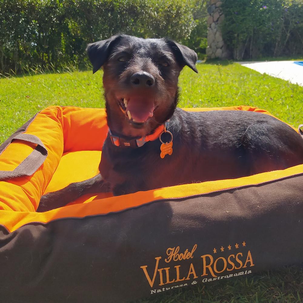 hotel villa rossa pet friendly, viagem com cachorro, quarteto fofástico
