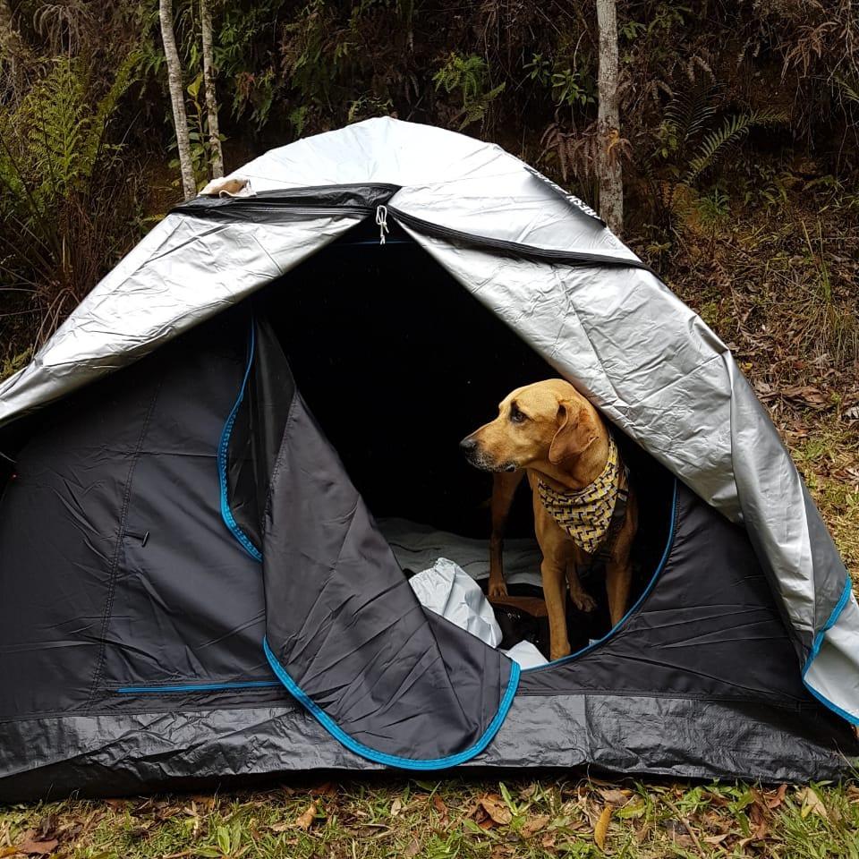 acampamento com cachorro