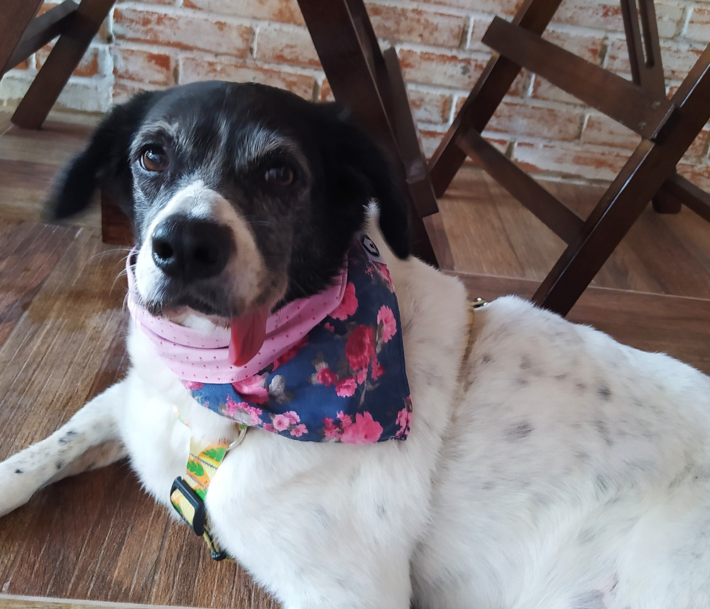 CINDY, PET FRIENDLY, DOG