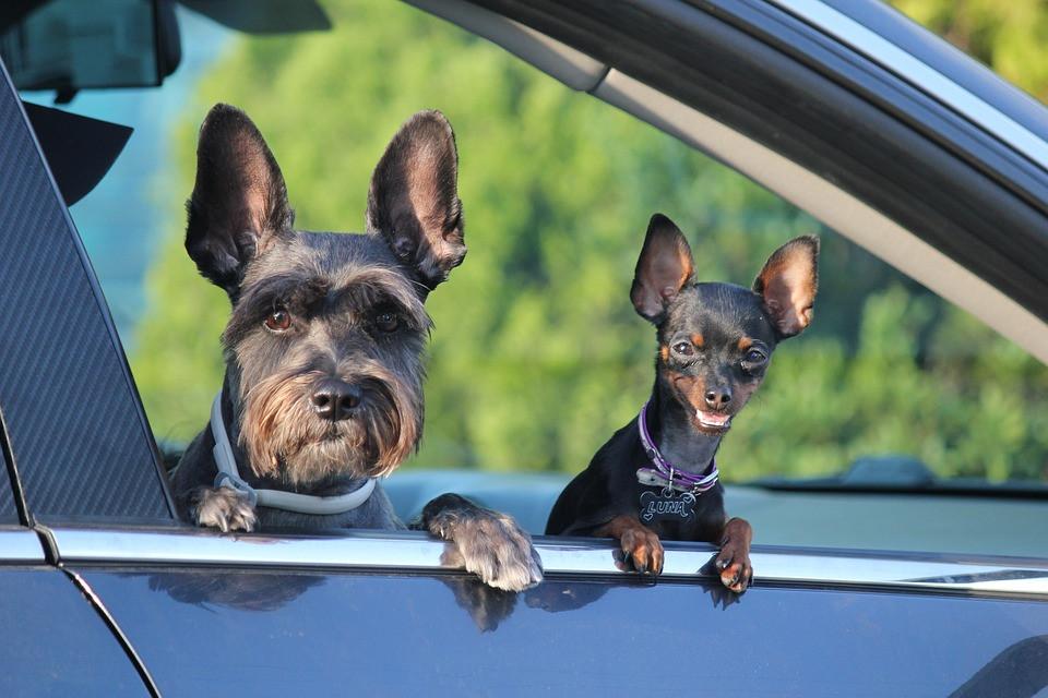 viagem com cachorro, viagem carro cachorro, pet no carro, carro cachorro, dog car