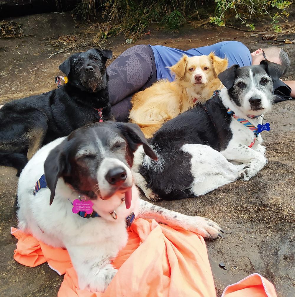 cachorros, dogs, pets, vira-latas,  Itararé, pet friendly, viagem com cachorro, pets, vira-latas, cachorros viajantes, aventura pet, rio, piscinas naturais, cachoeira