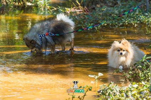 spitz, spitz alemão, trilha com cachorro, cãomigo