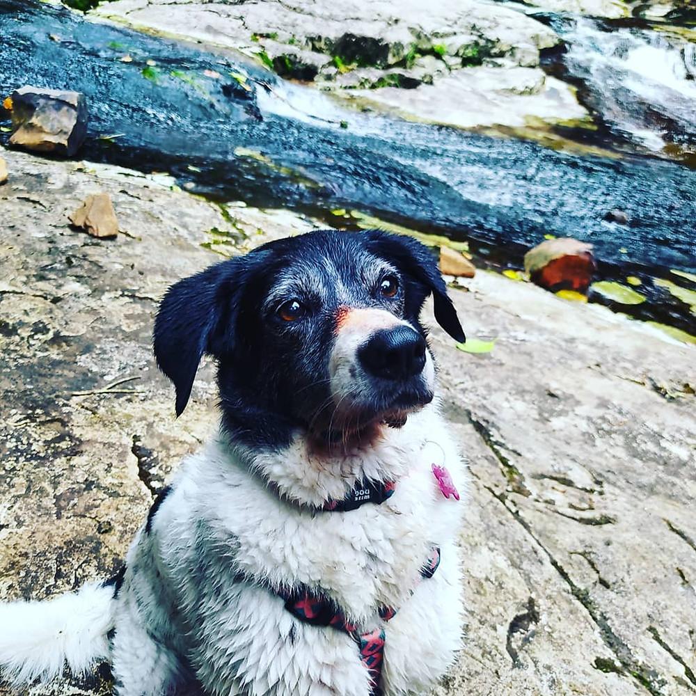 aventura pet, trila com cachorro, viagem com cachorro, viajar com pet, pet friendly, cachoeira