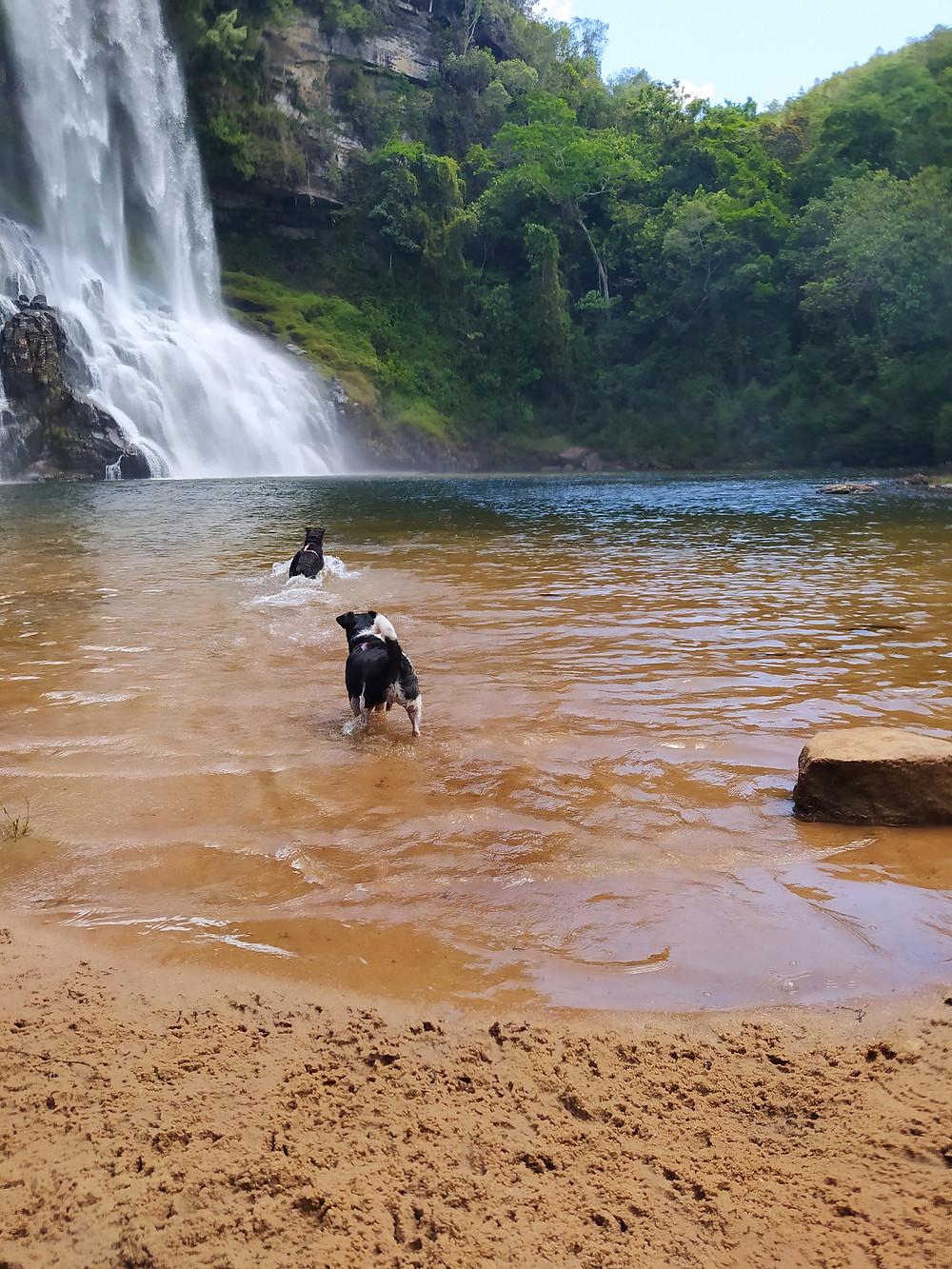 Cachoeira do Sobradinho com cachorro, sengés, pet