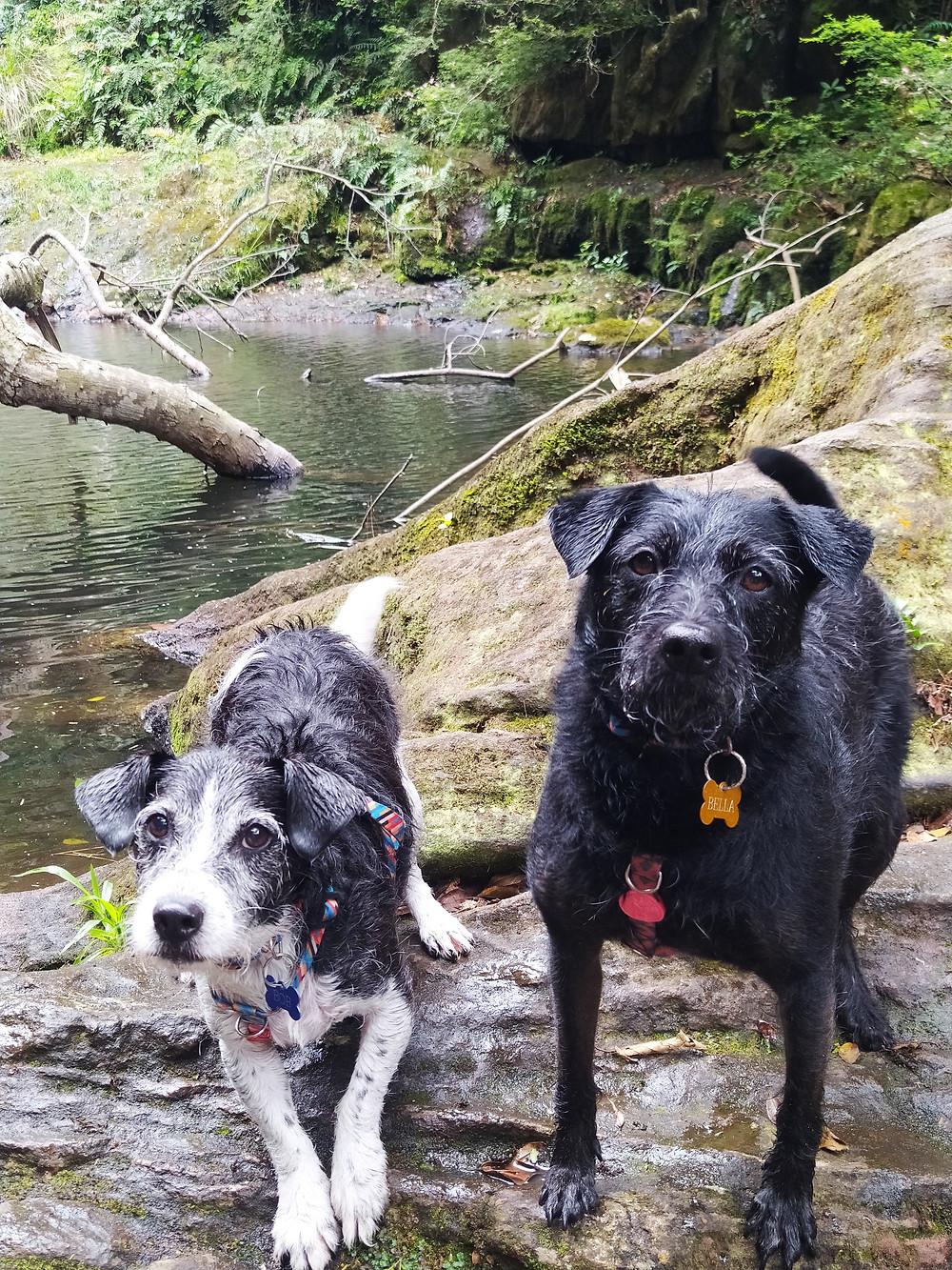 cachoeira palmito mole, cachoeira da invernada, pet friendly